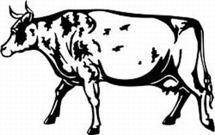 ayrshire cow decal