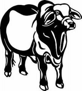 brahman cow decal