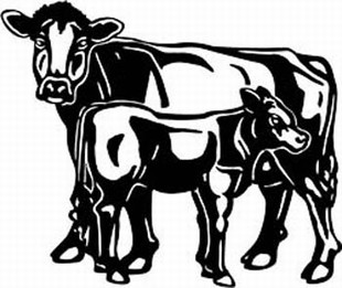 brown swiss cow decal