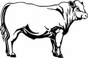 charolais cow decal