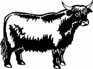 highland cow decal