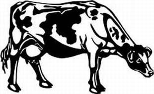 holstein cow decal 6