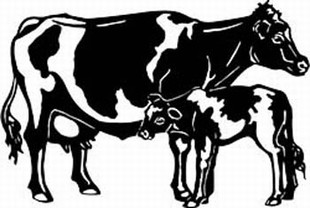 holstein cow decal 2