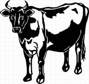 jersey cow decal 2
