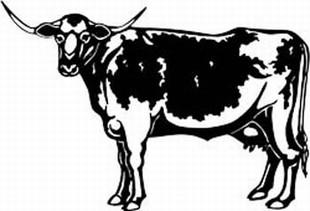 longhorn cow decal