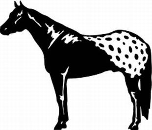 Appaloosa horse decal