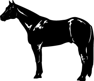 black arabian horse decal