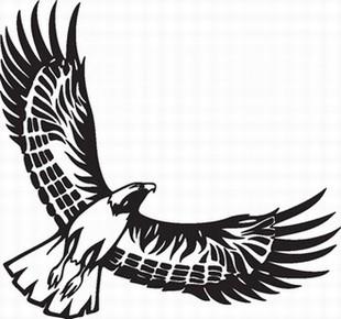 Eagle_16