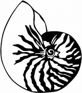 Nautilus Decal