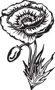 poppy flower decal