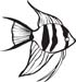 Angel Fish Decal