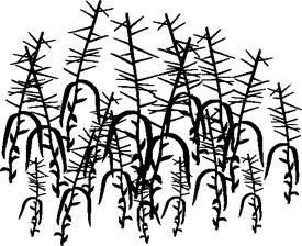 Winter Thorns