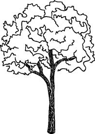 Winter Maple Tree